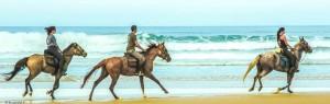 cheval promenade à l'ocean, locations de vacances, gîte, chambres et studio, sanguinet, pension, cours d'équitation, demi-pension proche Biscarrose et bassin d'Arcachon, promenade, obstacle, animations et activité équitation