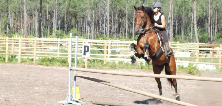 pension, cours d'équitation, demi-pension proche Biscarrose et bassin d'Arcachon, promenade, obstacle, animations et activité équitation